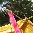 Hung Up Stick Insect  by Virginia McGowan