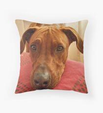 Please??? Throw Pillow