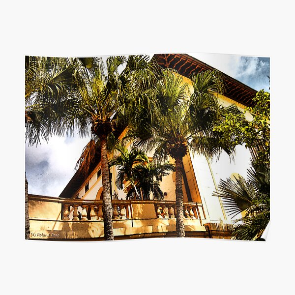 Palms and Coconut Trees Poster