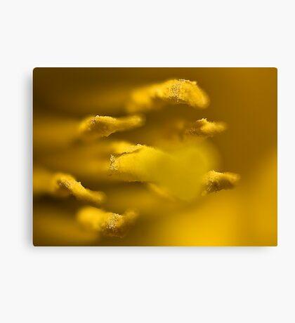 Inside the Trumpet (Daffodill) Canvas Print