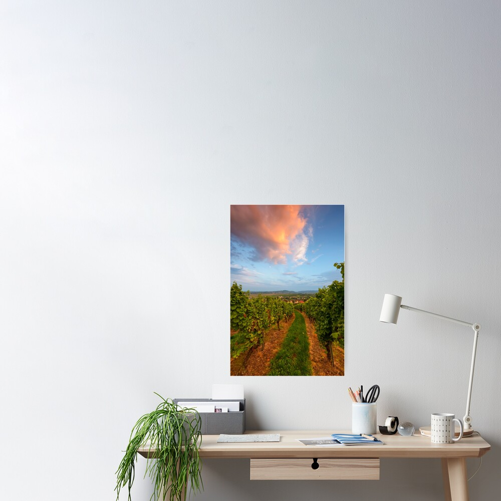 Poster «Dans le vignoble de Wangen»