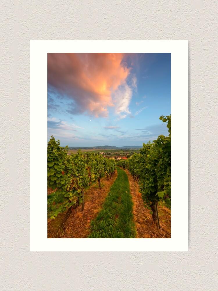 Impression artistique ''Dans le vignoble de Wangen': autre vue