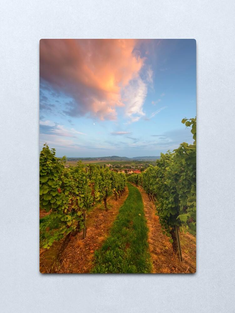 Impression métallique ''Dans le vignoble de Wangen': autre vue