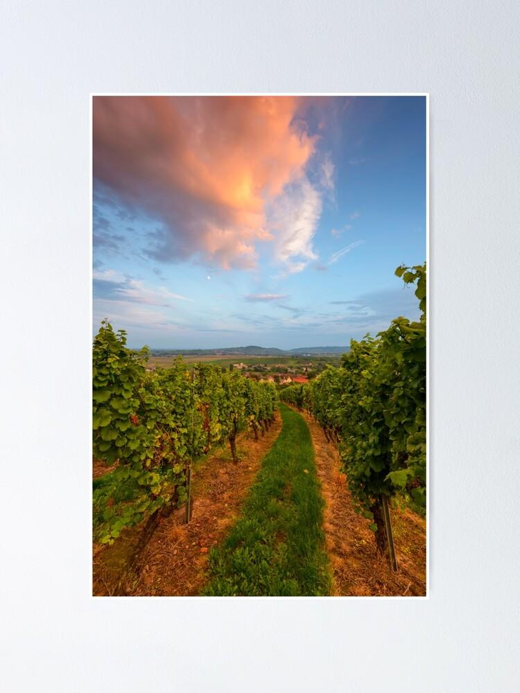 Poster ''Dans le vignoble de Wangen': autre vue