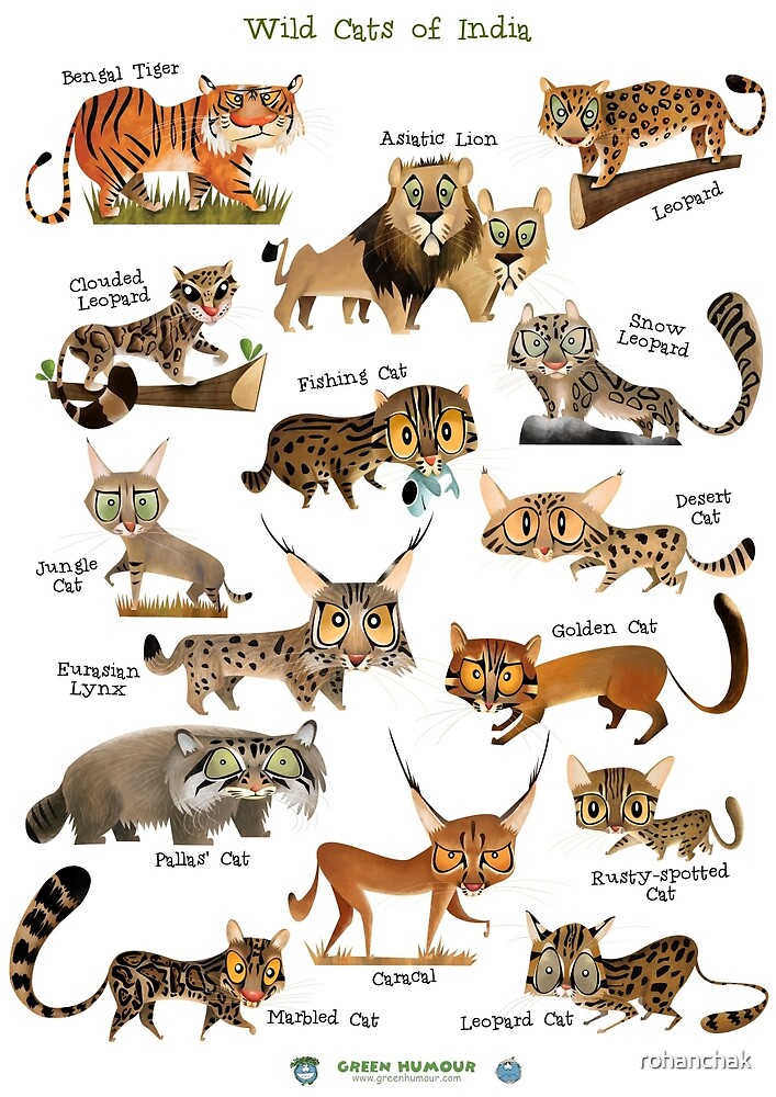 Wild Cats of India by rohanchak