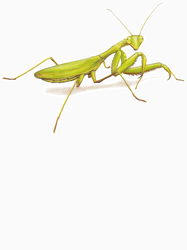 Praying Mantis by LFurtwaengler