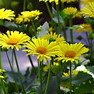 Spring Into Summer  by sue shaw