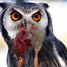 Dare You !!!!!! by Clive