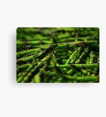 Grilled Asparagus w/ Balsamic Glaze Canvas Print