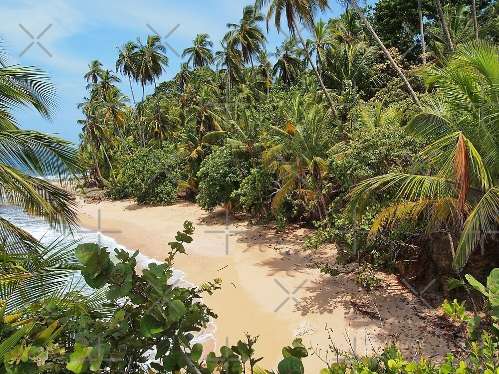 Wild tropical sandy beach with lush vegetation by Dam - www.seaphotoart.com