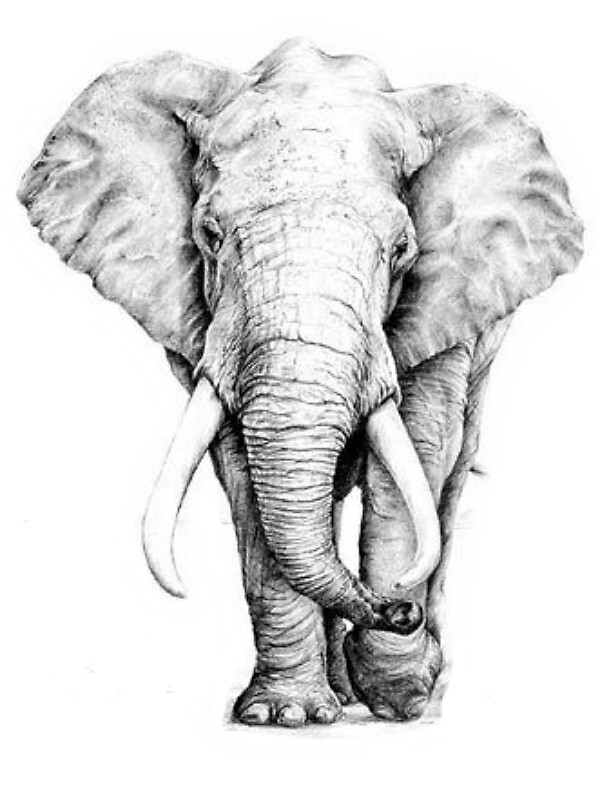 Elephant by holly92