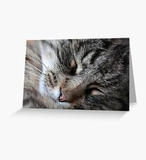 A sleeping Norway Forest Cat.  Greeting Card
