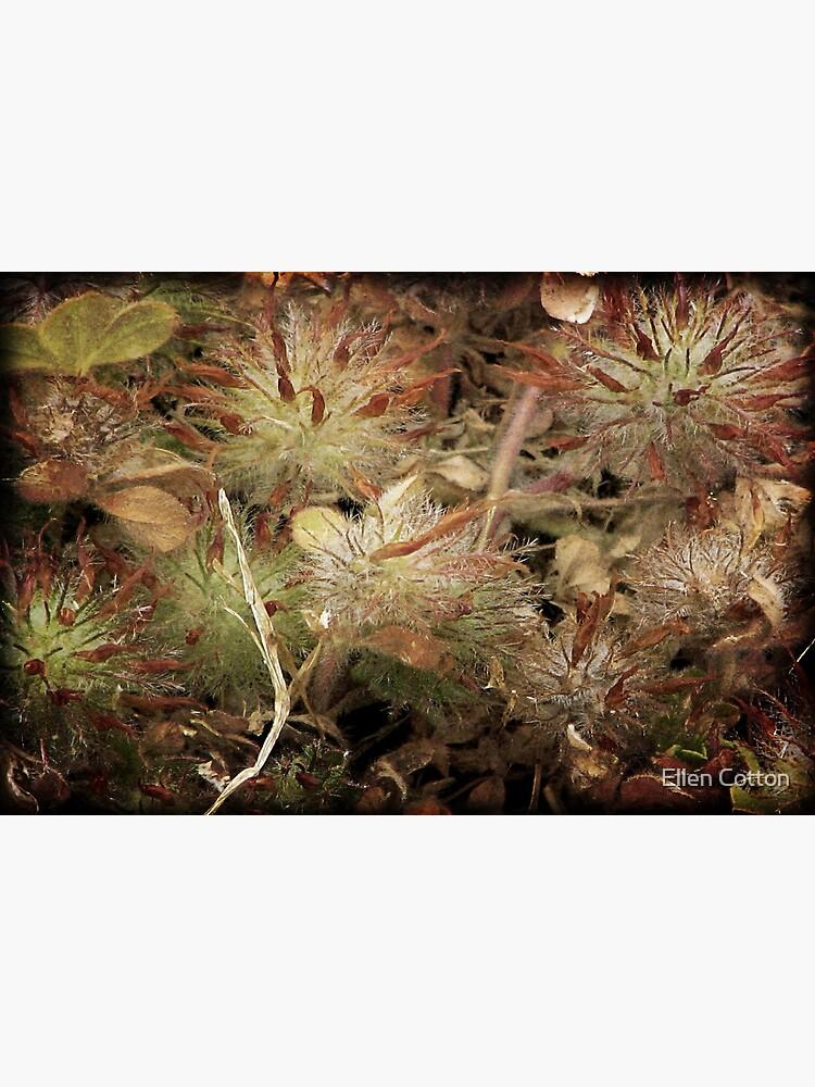 Weeds and Wildflowers  3 by ellcot
