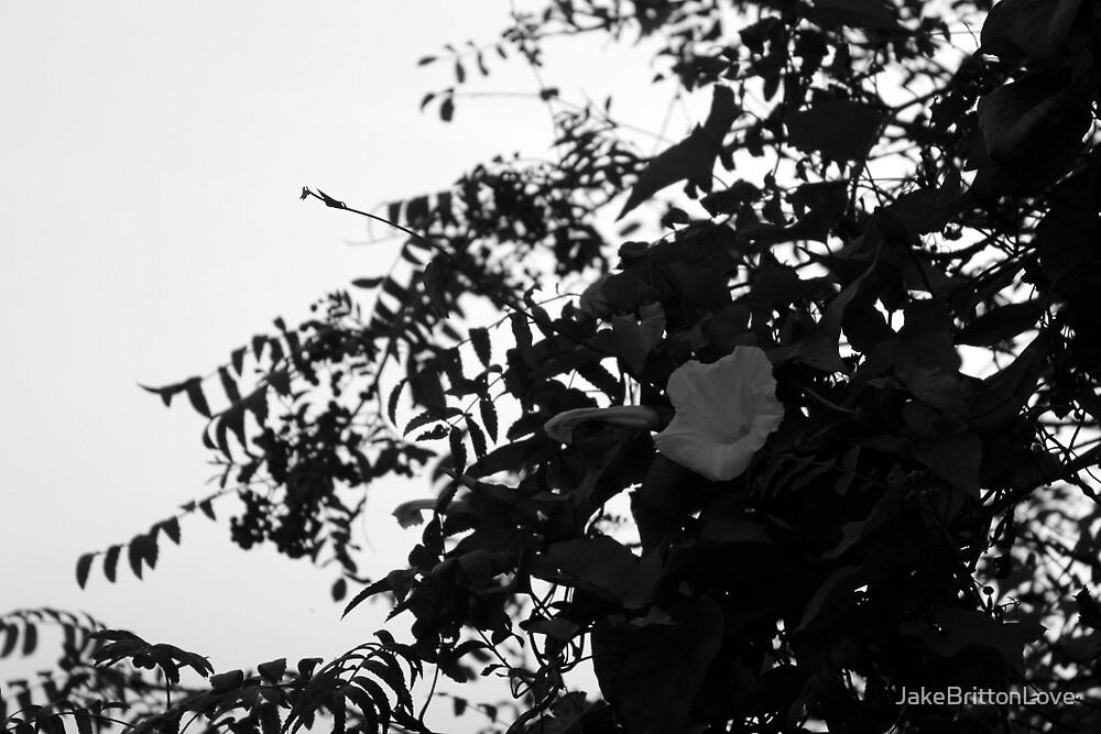 Shadow flower by JakeBrittonLove
