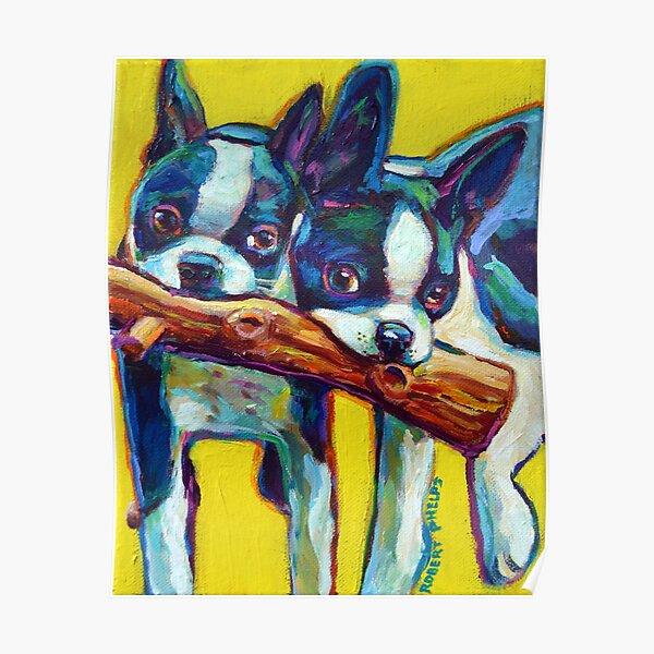 Süße Boston Terrier Welpen von Robert Phelps Poster
