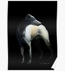Whippet In Black Poster