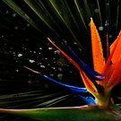 Jungle Bird by bradlentz-photo