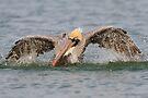 Pelican Bath by WorldDesign