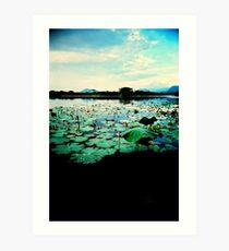 lotus sunset Art Print