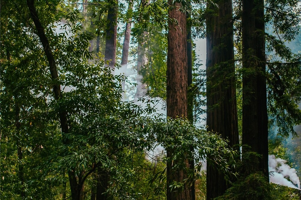 Trees and Smoke by nataliebaeza