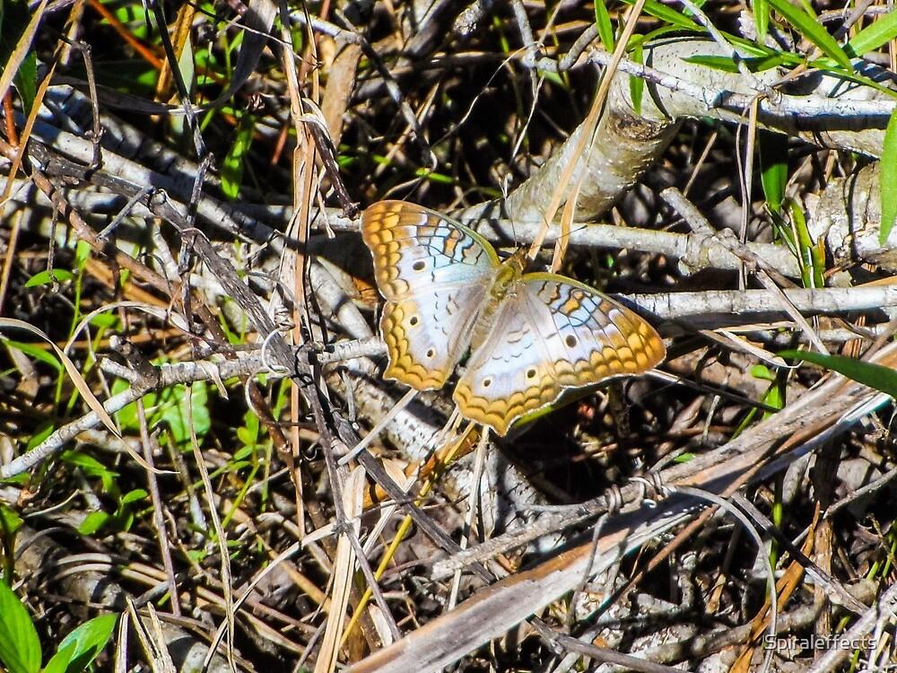 butterfly 1 by Spiraleffects