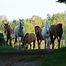 Even Horses Don't Have Great Mornings by Tracey  Dryka