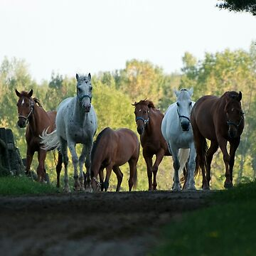 Even Horses Don't Have Great Mornings by Destined2see