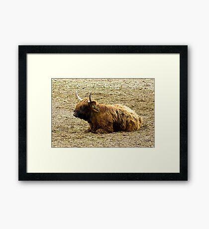 Highlander  #3 Framed Print