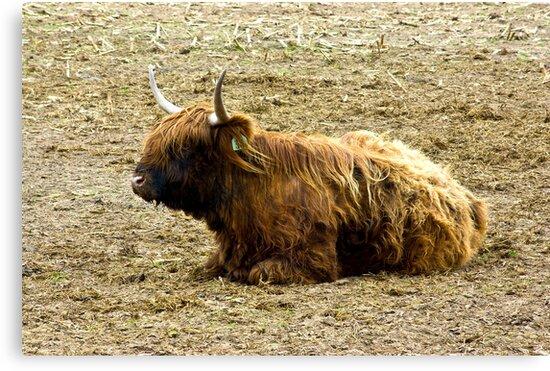 Highlander  #3 by Trevor Kersley
