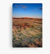 Field Color Canvas Print