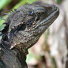Water dragon - Alma Park Zoo, Brisbane by Leesa Habener
