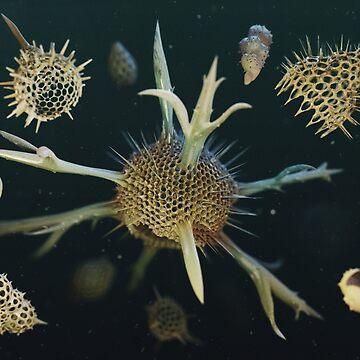 Radiolaria et Foraminifera 2019 de Ldarro