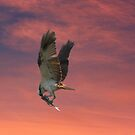 Eating on the Fly by byronbackyard
