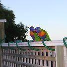 lovebirds by miroslava