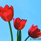 Tulip Thrice by GraceNotes