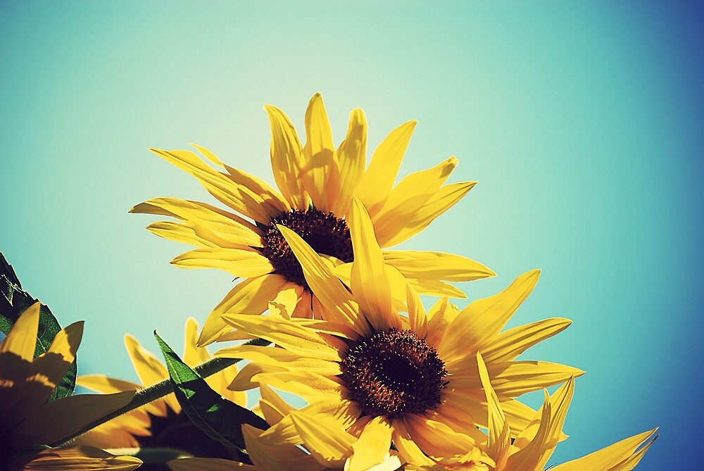 sunflowers by emmmscase
