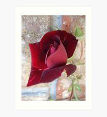 Ed's Rose Art Print