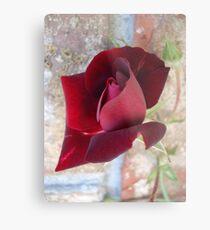 Ed's Rose Metal Print