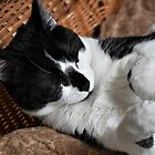 Sleeping Smudge  by DonnaM
