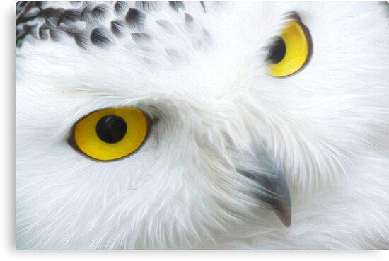 Snow Owl by creepyjoe