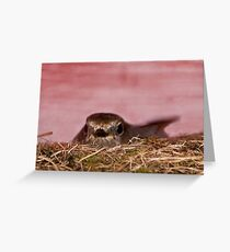Mother bird nesting over the tool shed  Greeting Card