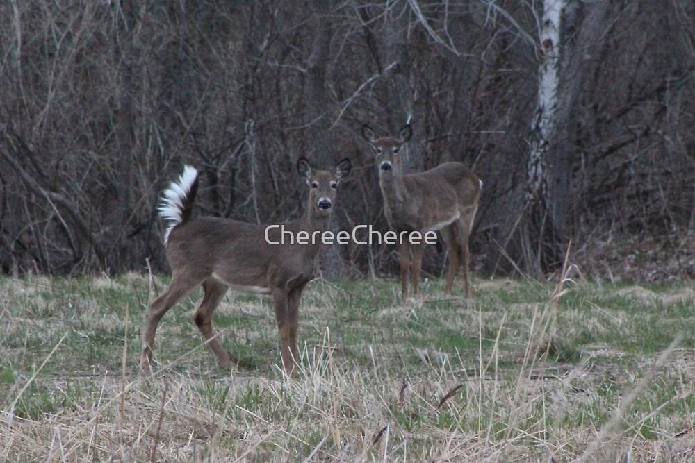 White Tail Deer by ChereeCheree