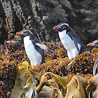 Snares Crested Penguins von Carole-Anne
