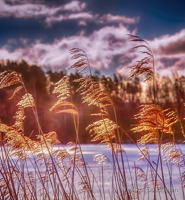 Winter Morning Light 8 by Veikko  Suikkanen