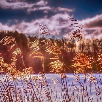 Winter Morning Light 8 by wekegene