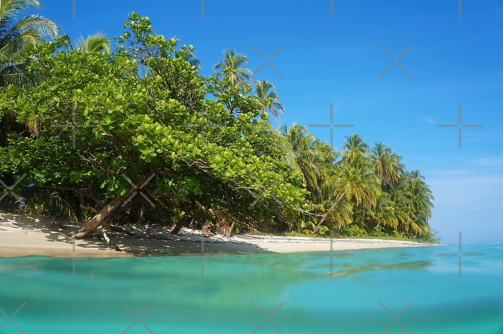 Tropical sandy shore with lush vegetation by Dam - www.seaphotoart.com
