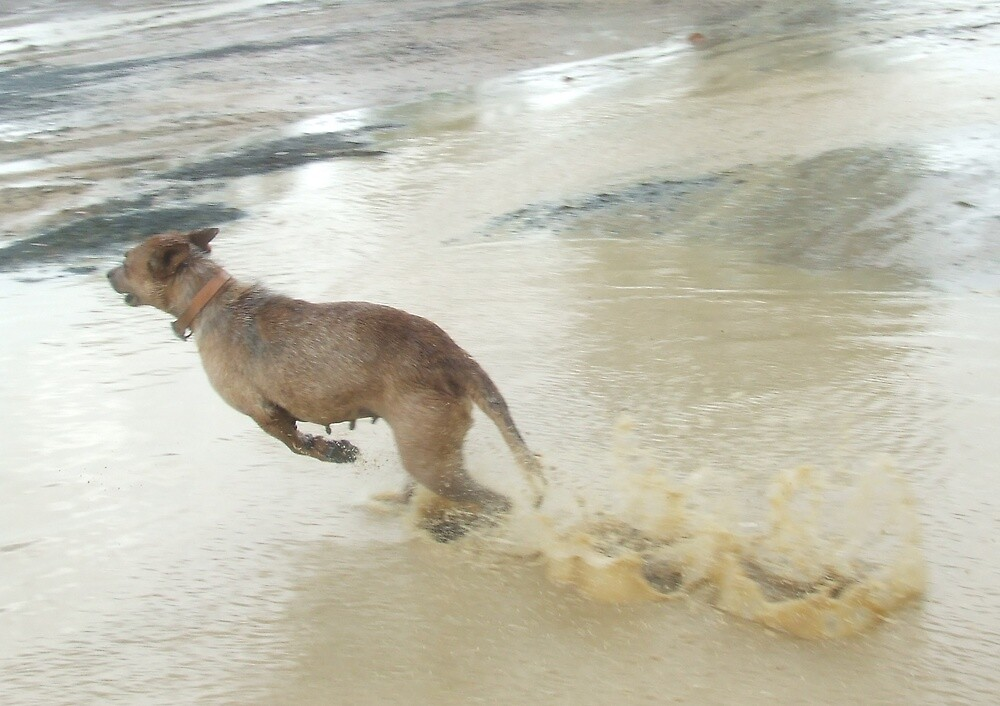 Dog or Kangaroo?? by Edwina Hare
