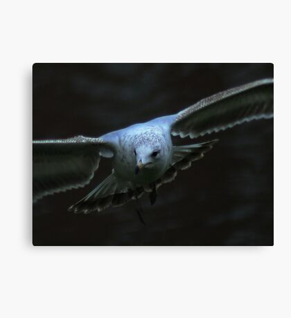 The Eyes of a Seagull Canvas Print