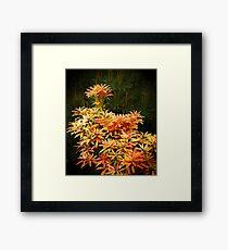 shrubs Framed Print