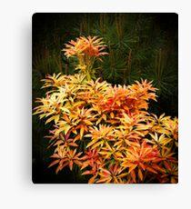 shrubs Canvas Print